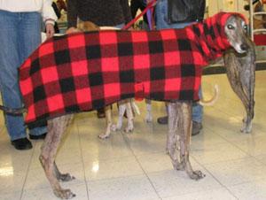greyhound classic track meet scoring